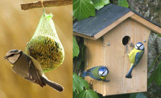 Jardiland longu jardinerie animalerie fleuristerie for Oiseaux du ciel