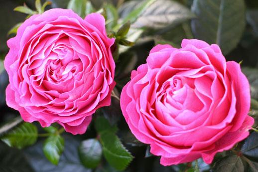 Notre march aux fleurs jardiland longu jumelles - Plantes vivaces fleuries toute l annee ...