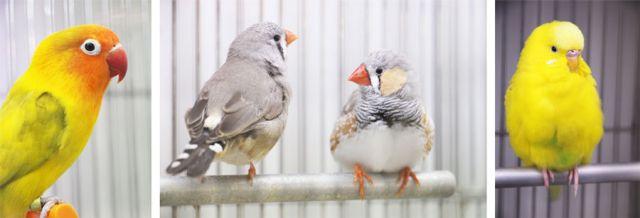 oiseaux domestiques mandarin perruche inséparables jardinerie longue